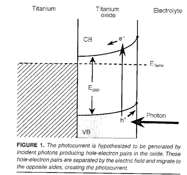 The photocurrents are result from light exciting electrons in the oxide film, in the presence of a Schottky barrier.