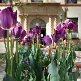 Image of purple flowers in front of Brown Hall, NMT's administration building.